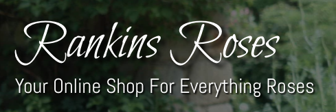 Rankins Roses
